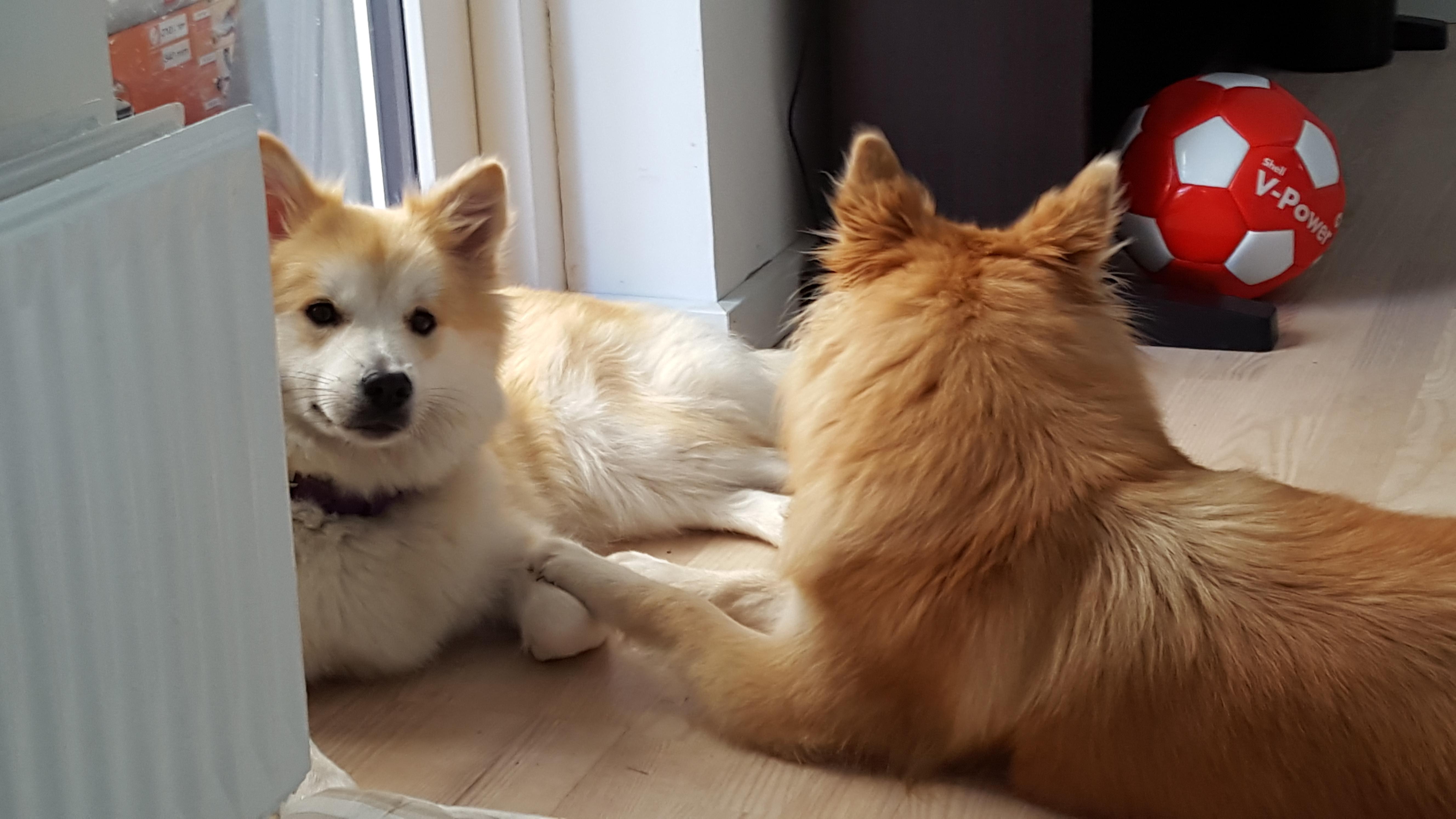 Visna og Lukka
